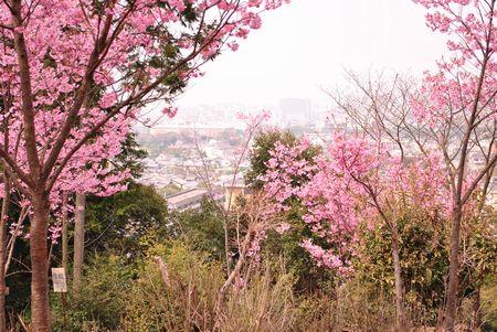 若王子神社 桜花苑