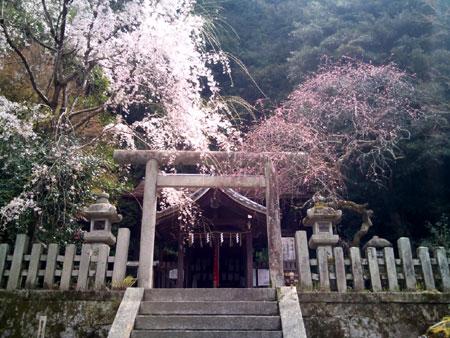 大豊神社 本殿