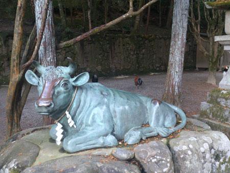 石上神宮 牛