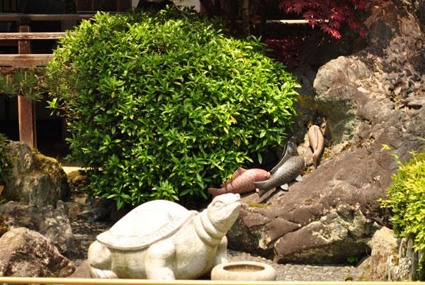 松尾大社 亀と鯉