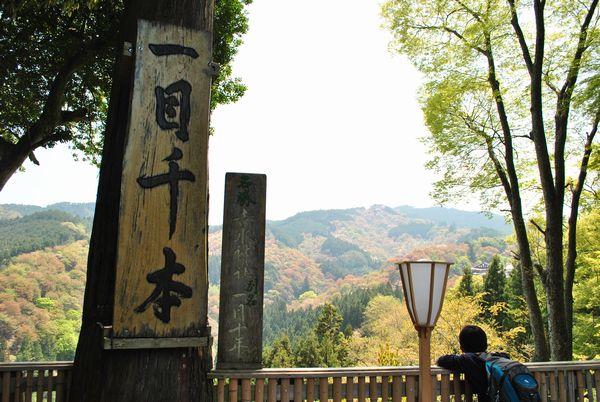 吉水神社 一目千本
