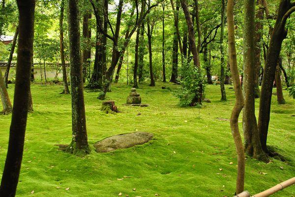 秋篠寺 苔庭