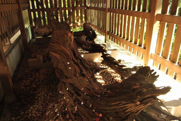 おのころ島神社 ご神木