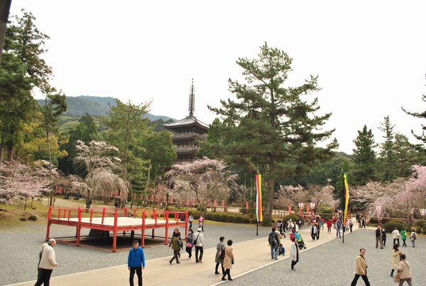 醍醐寺 金堂 前庭