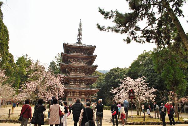 醍醐寺 五重塔 桜