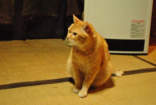 京都生ショコラ 猫