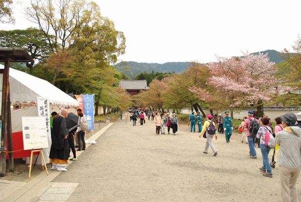醍醐寺 桜馬場