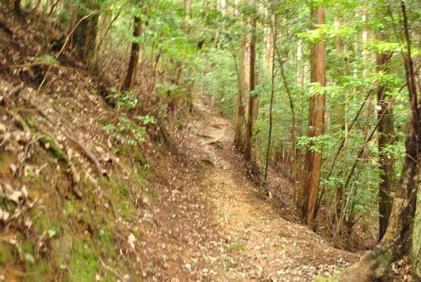 文覚上人の墓への道