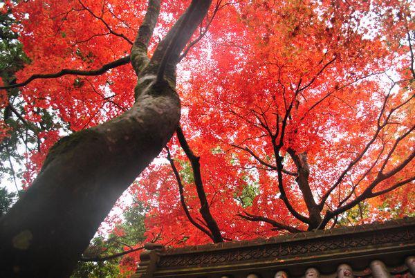 永源寺 総門の紅葉