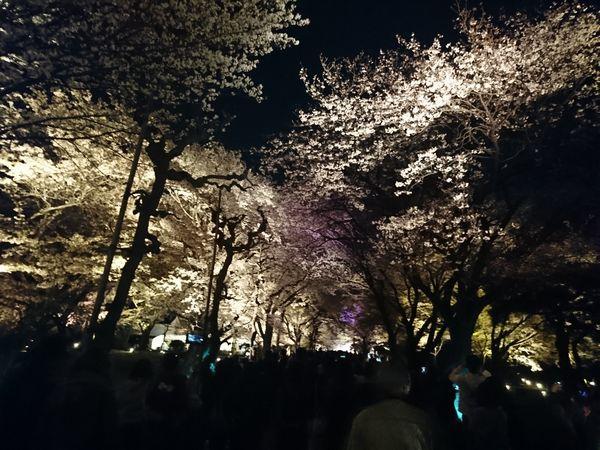 二条城 清流園 ライトアップ