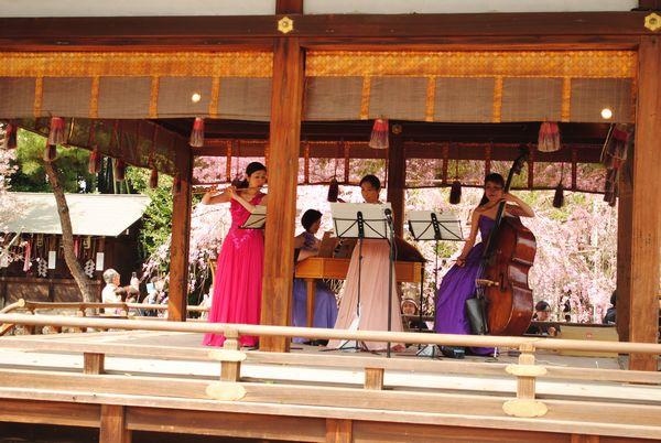 平野神社 桜コンサート