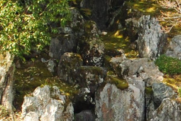 天龍寺 竜門瀑 鯉魚石